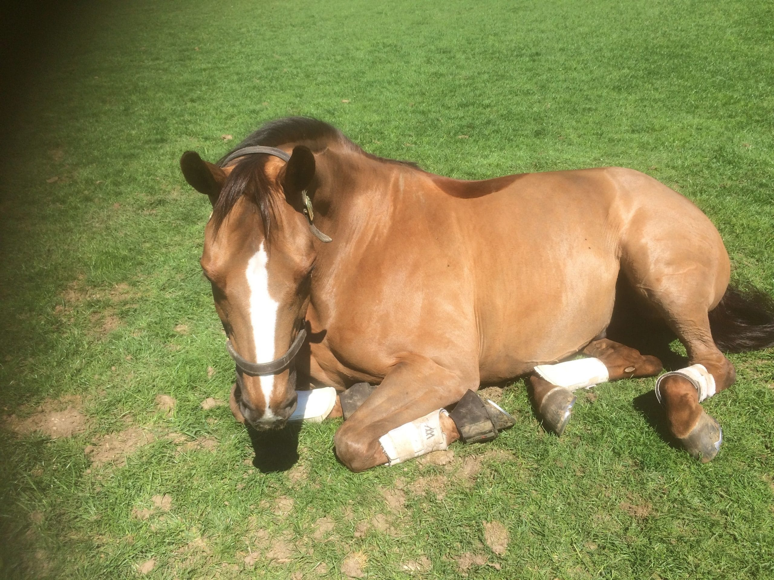 Red enjoying a sleep in the sun
