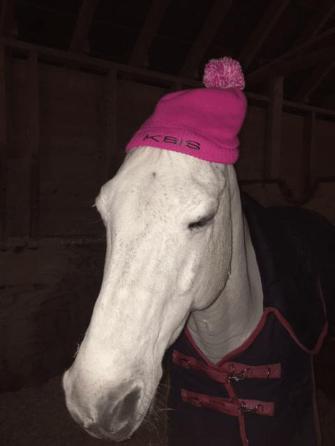 Felix - Alexia's pony
