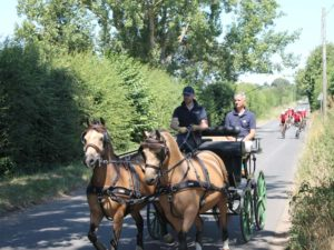 horse driving club insurance