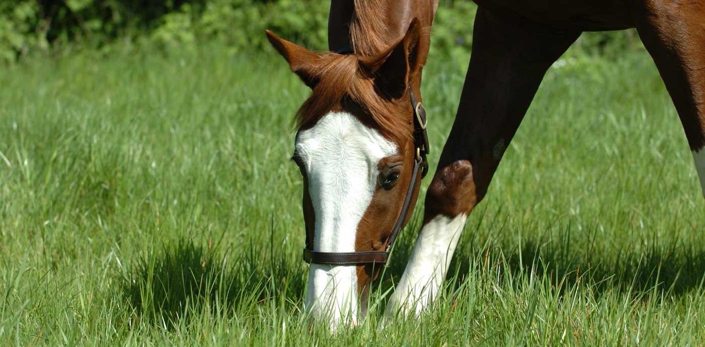 horse insurance main banner