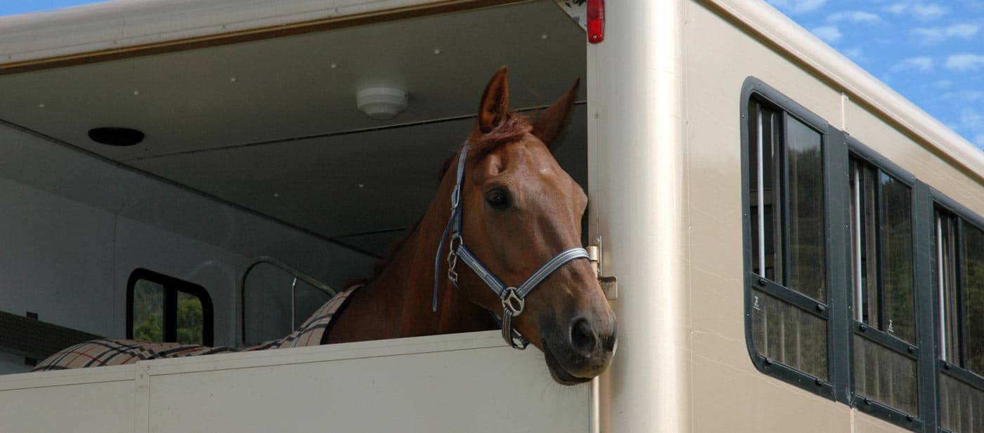 horse transporters insurance