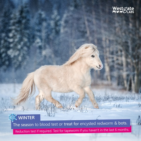 worming horses in winter advice